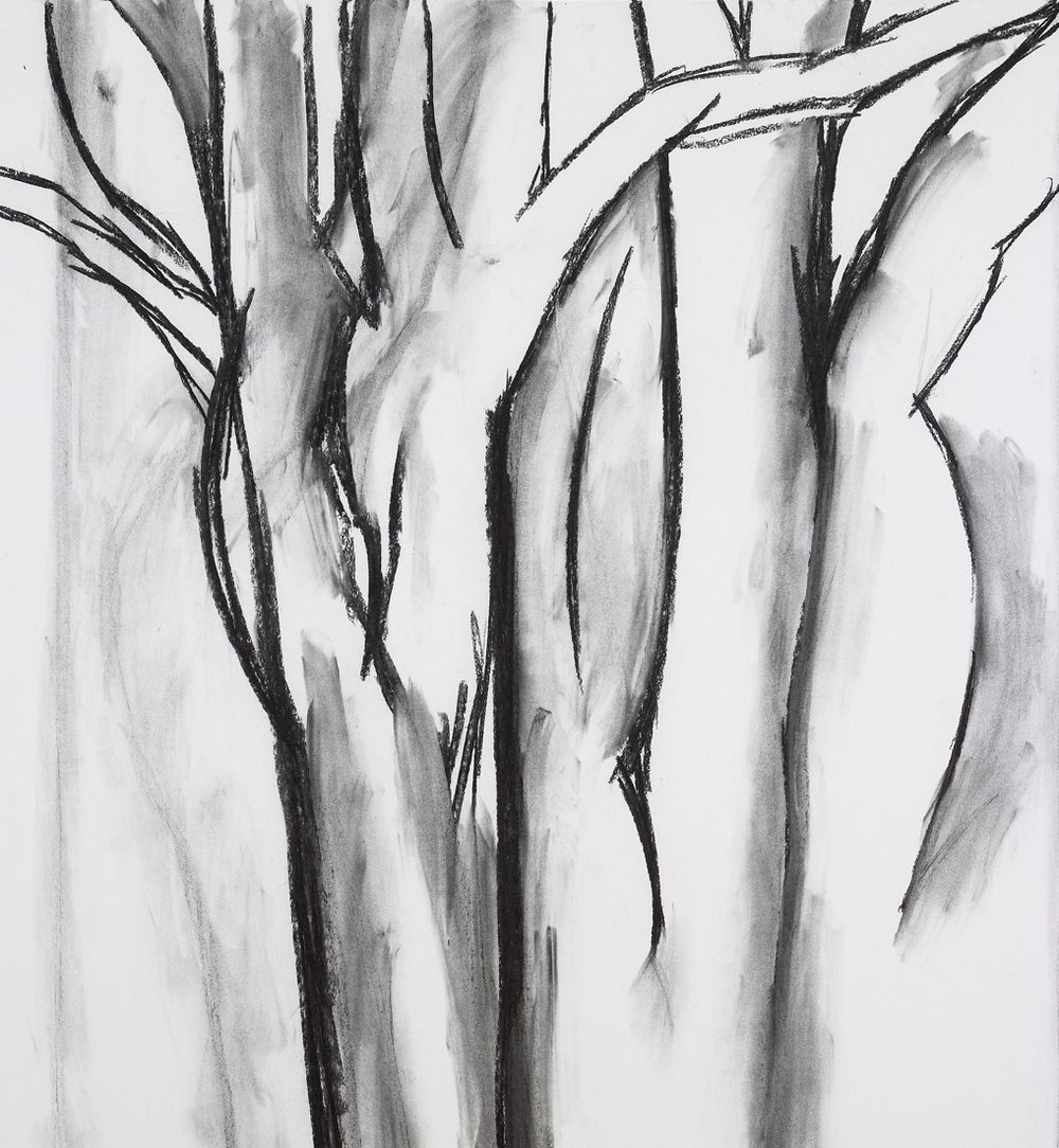 "Trees , charcoal on paper, 41"" x 37"", 2009"