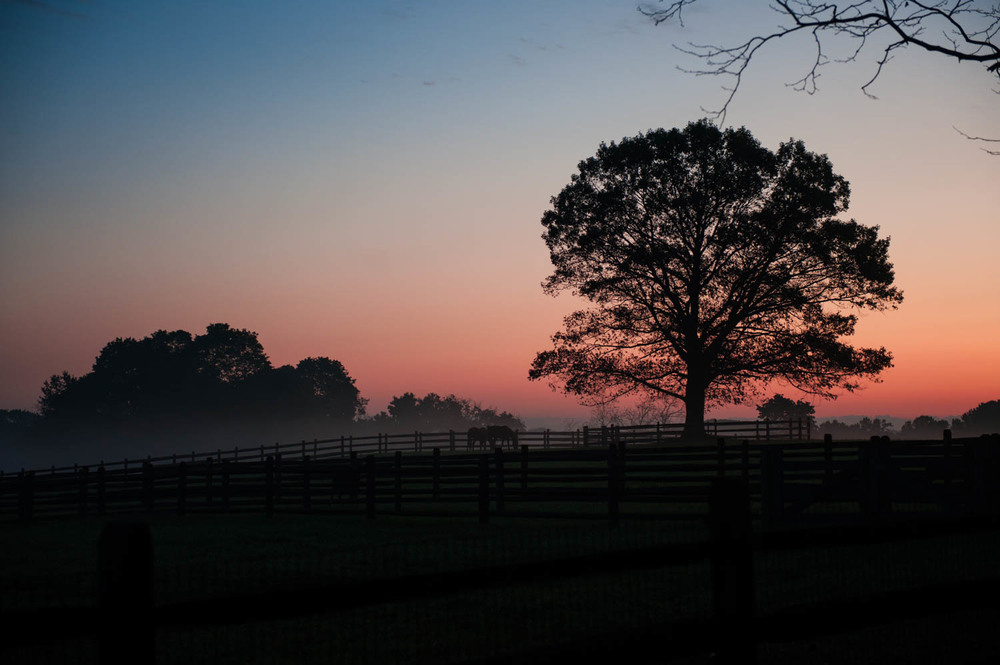 Early morning on the horse farm