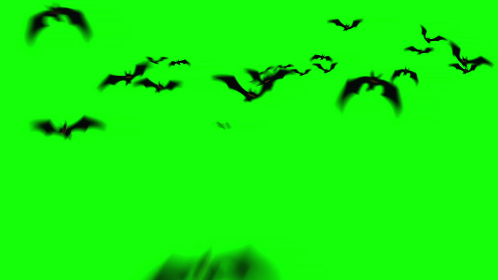 isolated 3d bats halloween animations and after effects templates