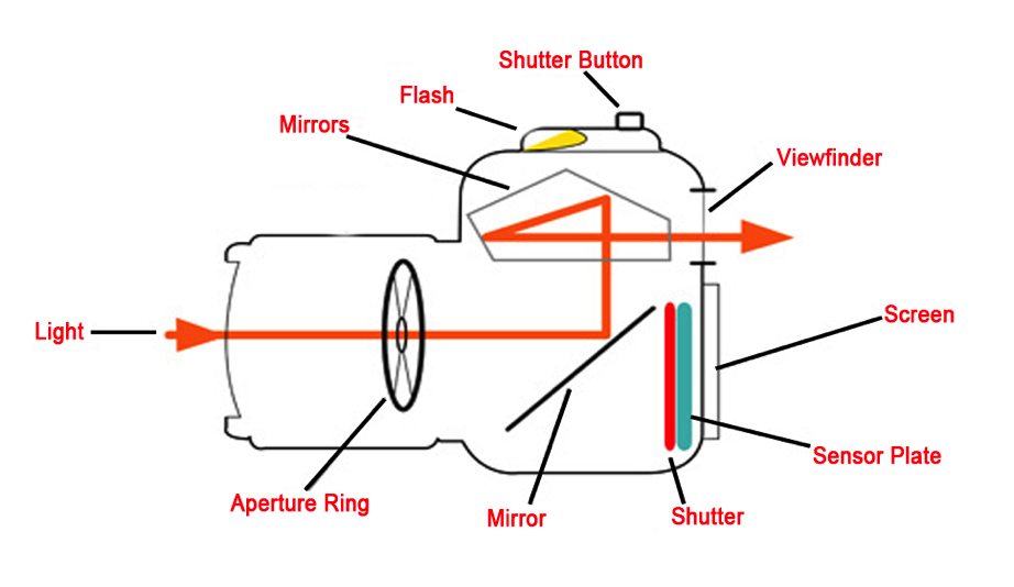 A vaguely helpful diagram of a camera's inner workings.