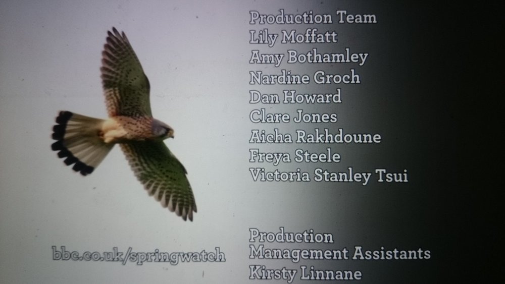 STORY DEVELOPER ,  BBC NHU Springwatch 2018 - Monitored and operated remote wildlife cameras on nests and in burrows, created character driven stories from wildlife behaviours.