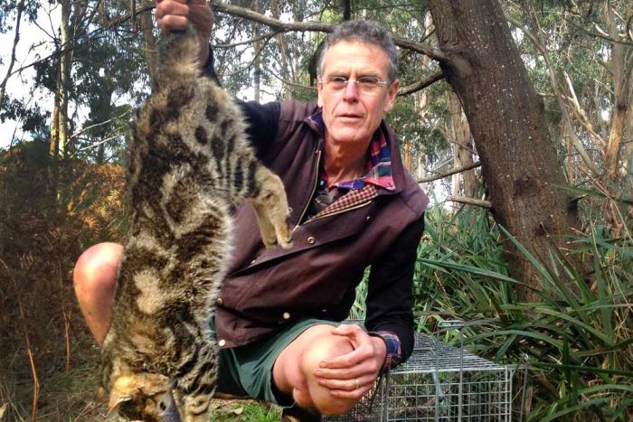 LEAD RADIO RESEARCHER   Background Briefing, ABC Radio National  -  Feral Cats Rewrite the Australian Story - Co-wrote a treatment and pitch for the program and then worked as the lead researcher and assistant sound recordist after the program was commissioned.