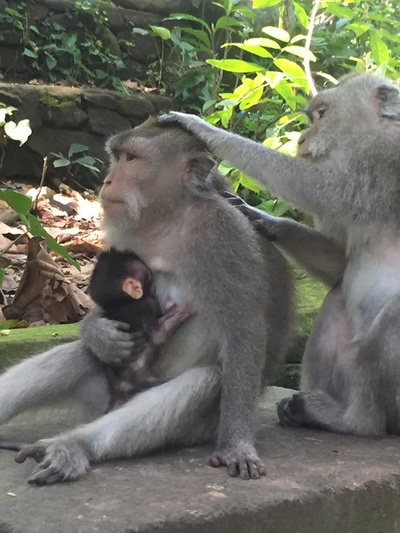 eat pray doula ballarat birth support bali indonesia (4).jpg