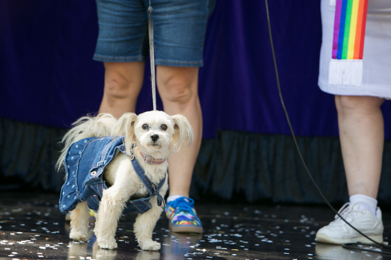 ChillOut Dog Show