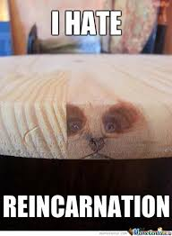 Haha. Probably how he feels about being a cat this time around! Lol
