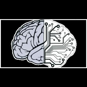 brain11-300x169.png