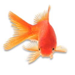 ornamentalfish.png