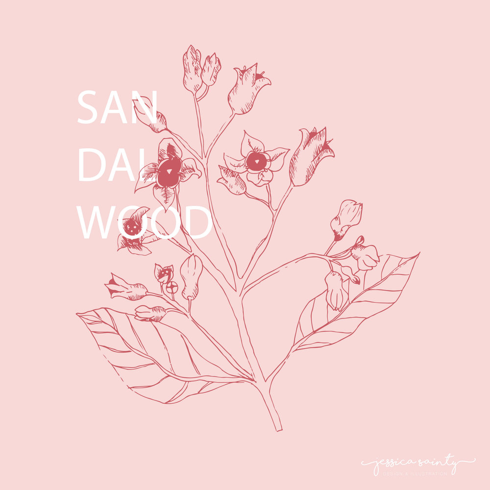 Sandalwood_illustration_pink.jpg
