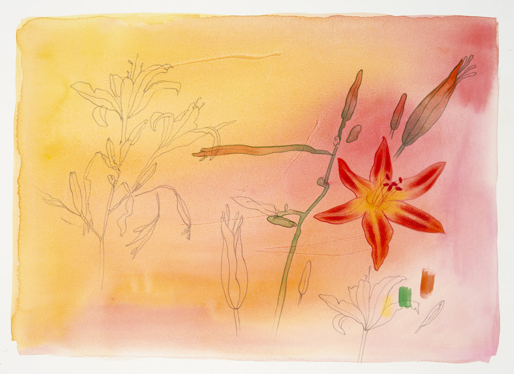 David Lyon Art - NN - Tiger Lily - 300dpi.jpg