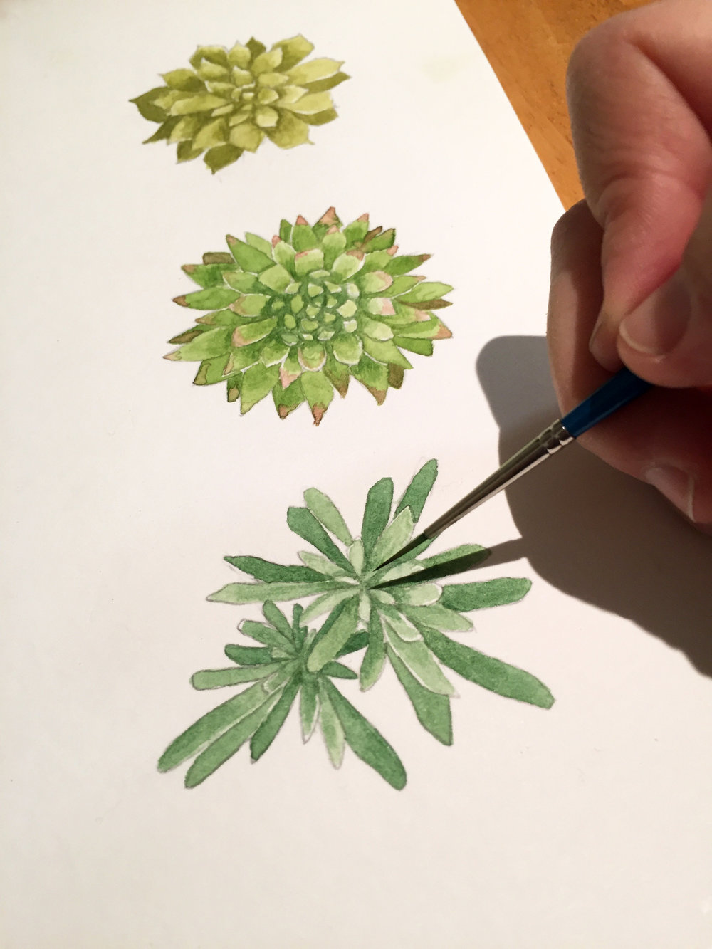 6 succulents progress 5.jpg