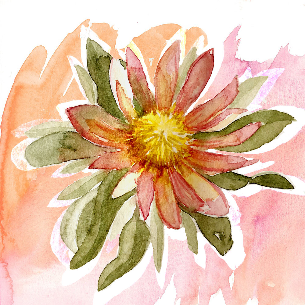 watercolour native flower.jpg