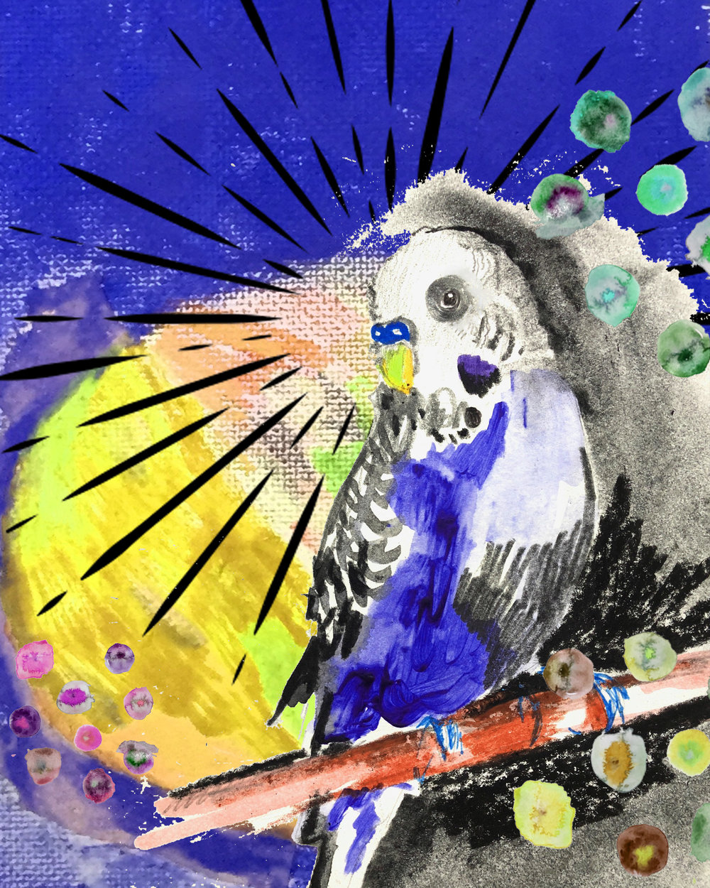mixed media budgie.jpg
