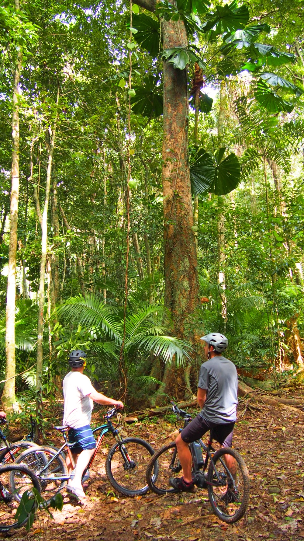 freeride electric adventure tours cape tribulation daintree rainforest queensland