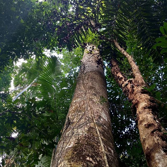 It's a jungle out here!  Come see it on our #walkandswim tour, or by #ebike. #capetribulation #rainforest #daintreerainforest #Queensland #portdouglasdaintree #exploretnq #thisisqueensland #Australia