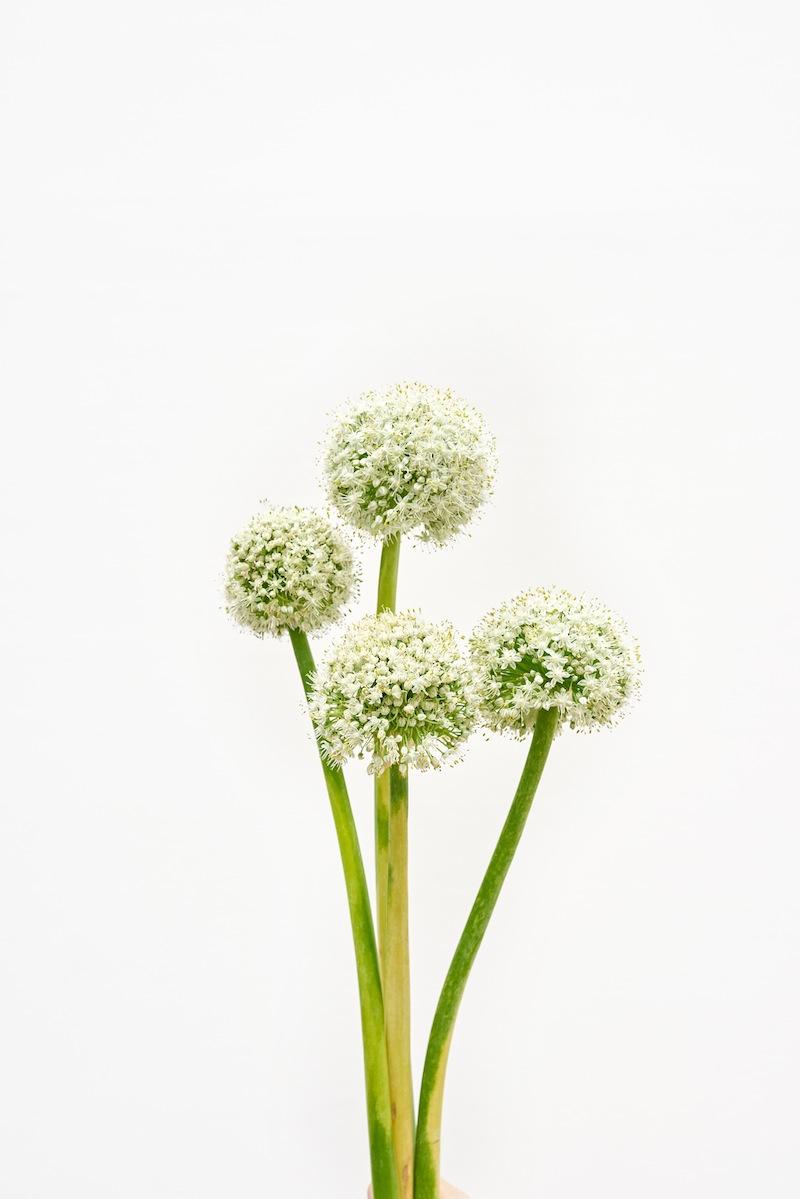 camillemarguet-fleur2.jpg