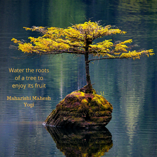 Maharishi Mahesh Yogi quote Water the roots of a tree quote .png