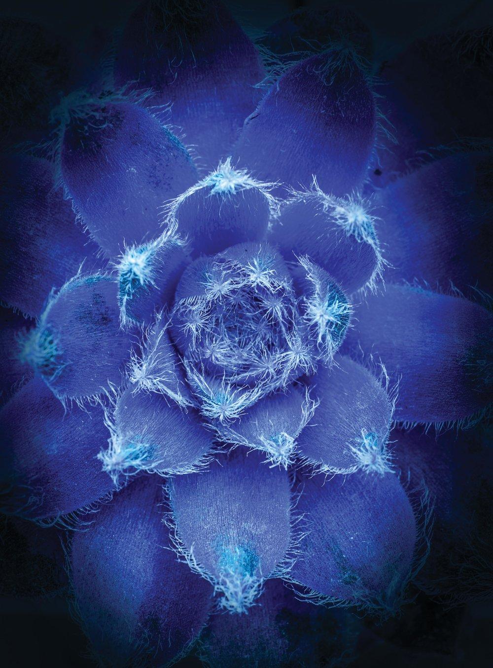 Blue_Heart_CMYK.jpg
