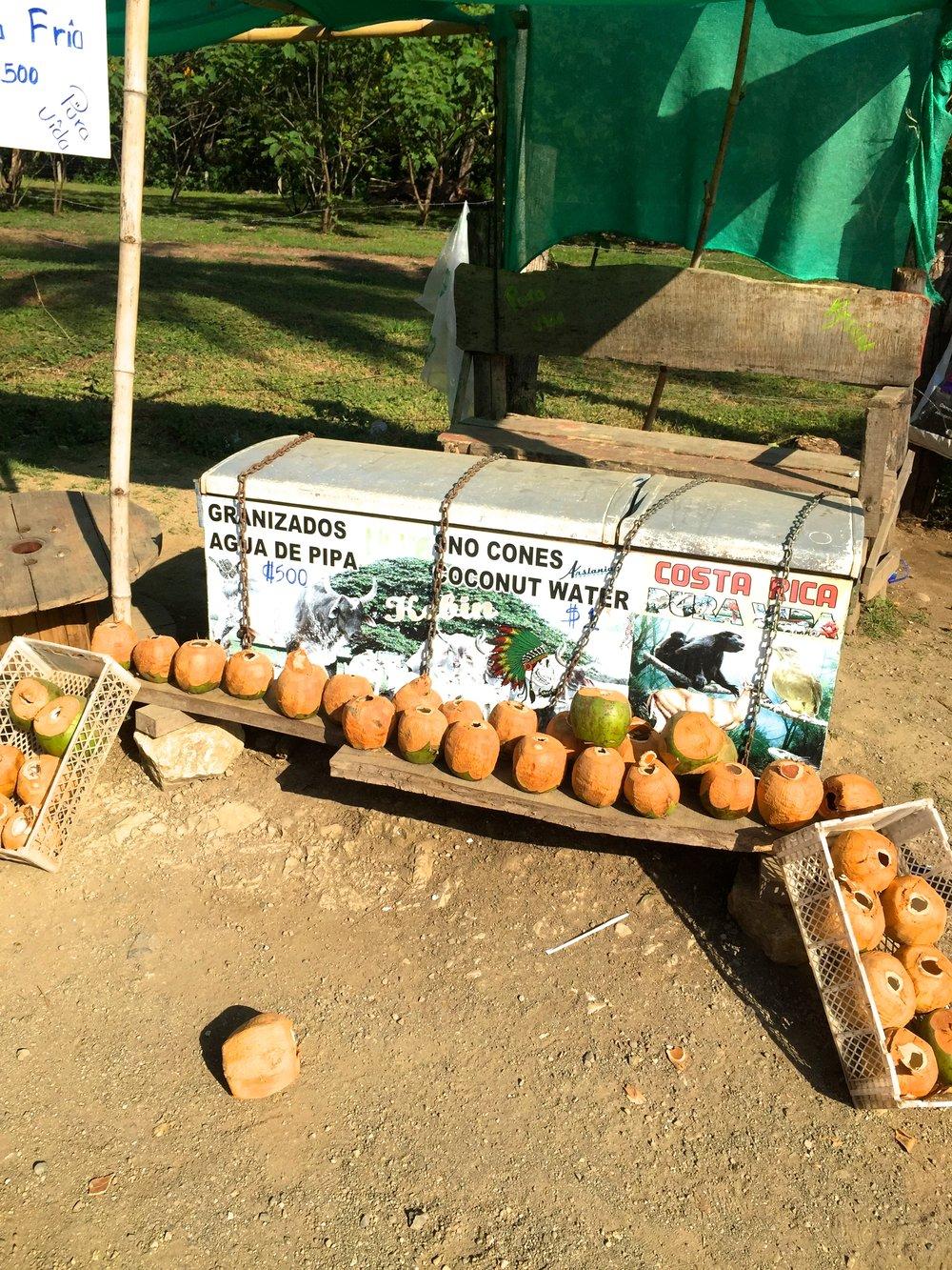 I Costa Rica stillar ofta man törsten med iskallt kokosnötsvatten. Du köper dem i små stånd längs med vägen.