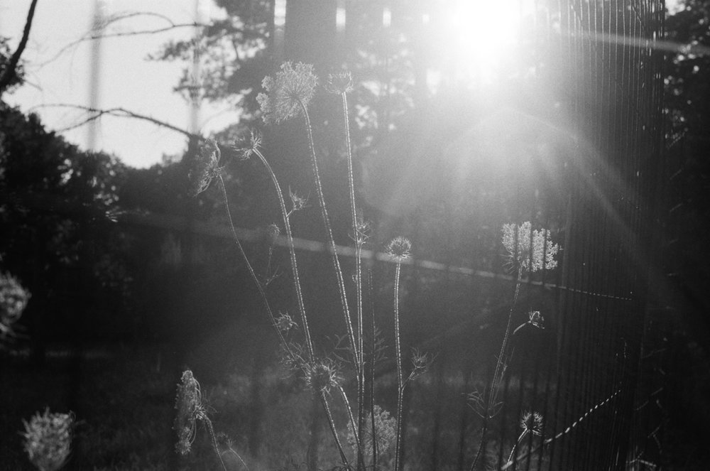 untitled shoot-001.jpg