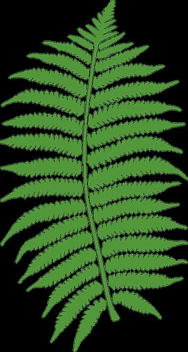 NEET Logo2.jpg