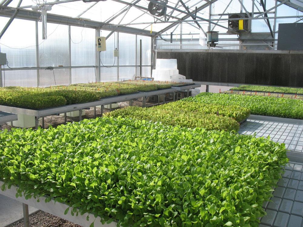 Micro-greens1-1024x768.jpg