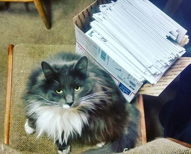 Freya woke up just as we finished our CSA mailing. Thanks kitty. #2018CSA #earlybirdsignups #winternap #hardworker #farmcat #realmail #communitysupportedagriculture