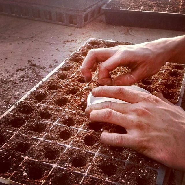 Our crew seeding onions inside the warm propagation house listening to books out loud while the wood furnace, sun, water and soil wakes up the seeds. #woodfueled #byhand #organicseeds #organicsoil #compost #alliums #awrinkleintime  #mondaysowing #farmersgrowingfood