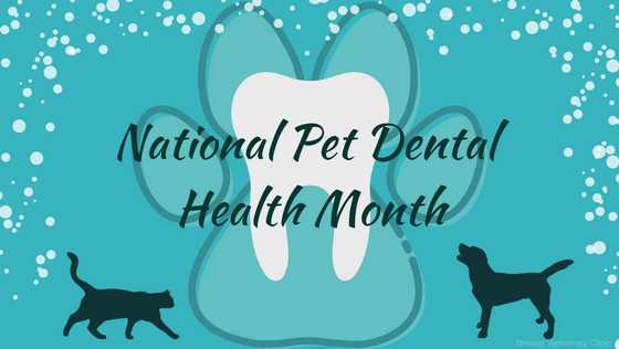 National Pet Dental Health Month 2 (1).png