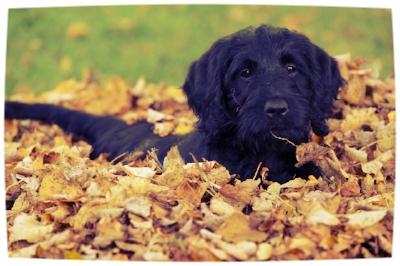 autumnleavesdog.jpg