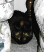 Lizzy hiding .jpg