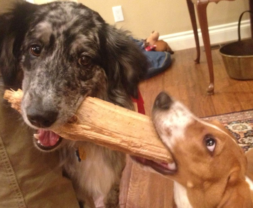 """Yeah! Sticks!"""