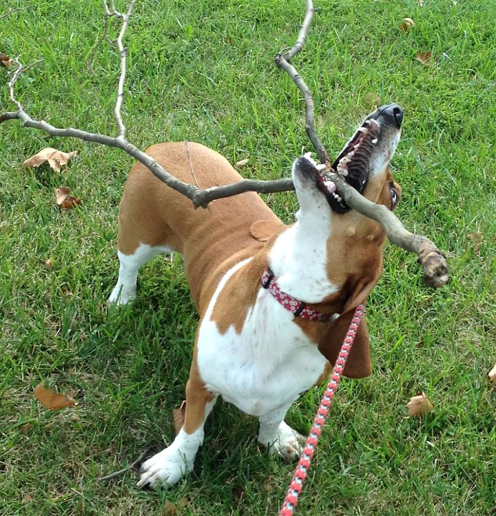 Here's a stick for you!