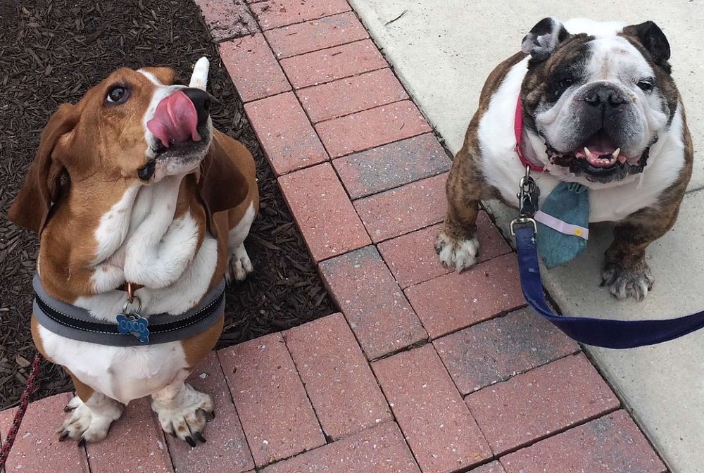 with bulldog friend.jpg
