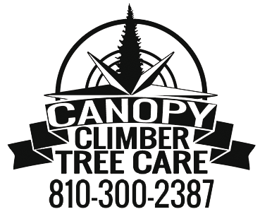 Canopy Climber Tree Care