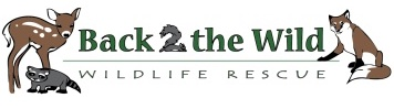 Back 2 the wild wildlife rescue