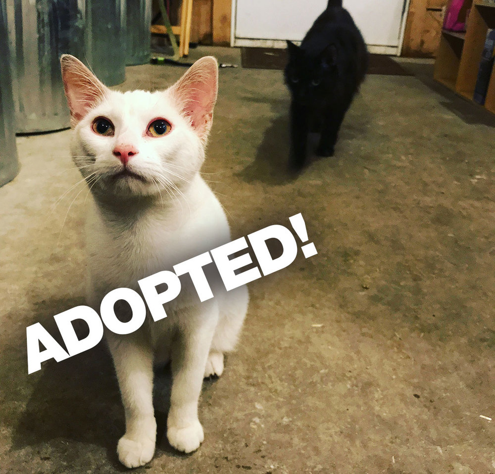 JeffreyAdopted.jpg