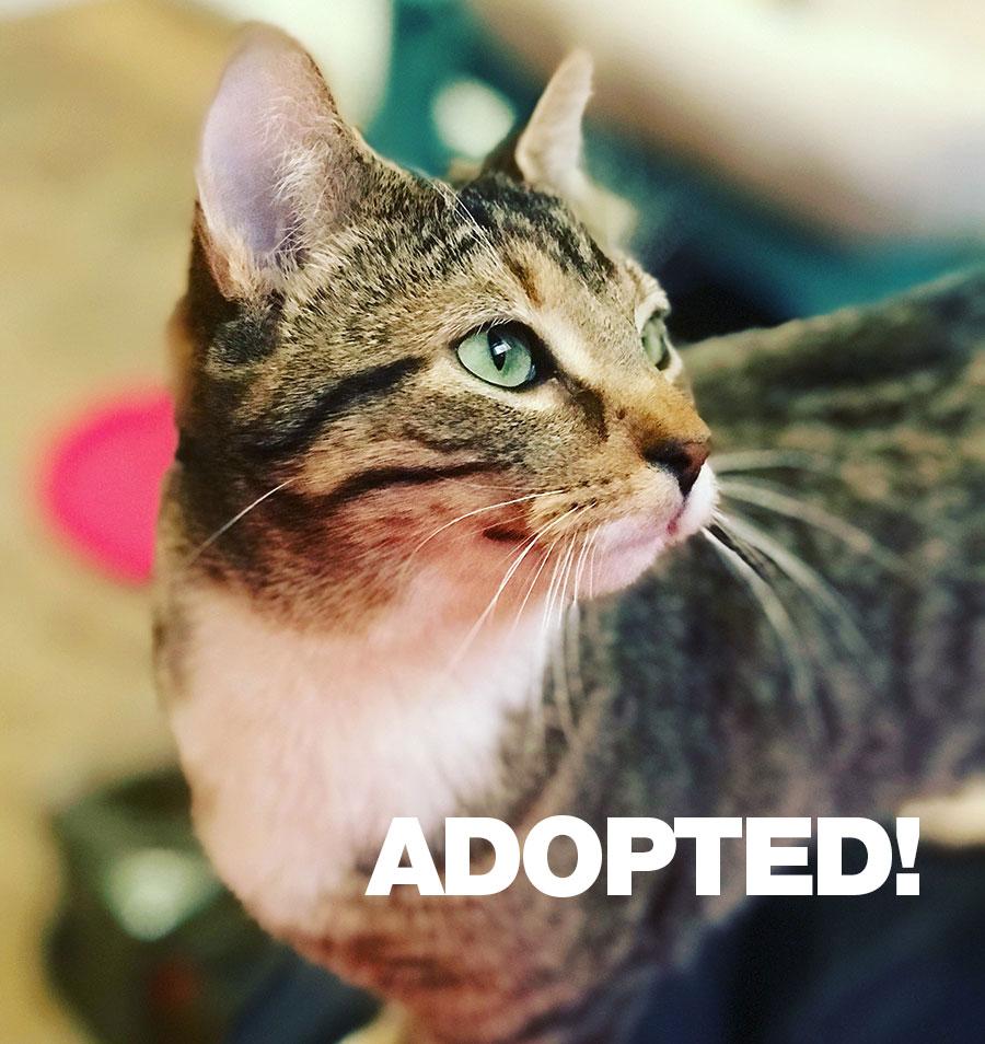 Julia-Adopted.jpg