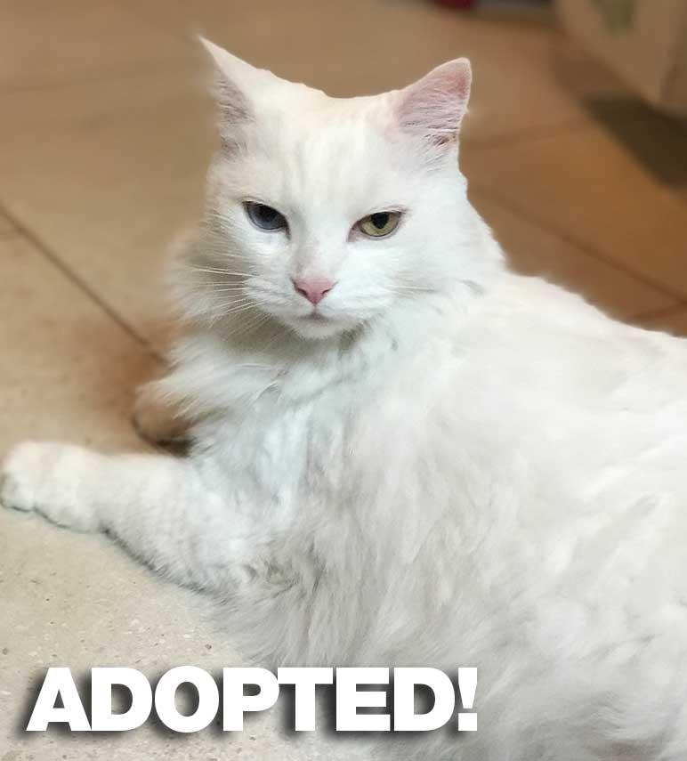 Sacha-Adopted.jpg