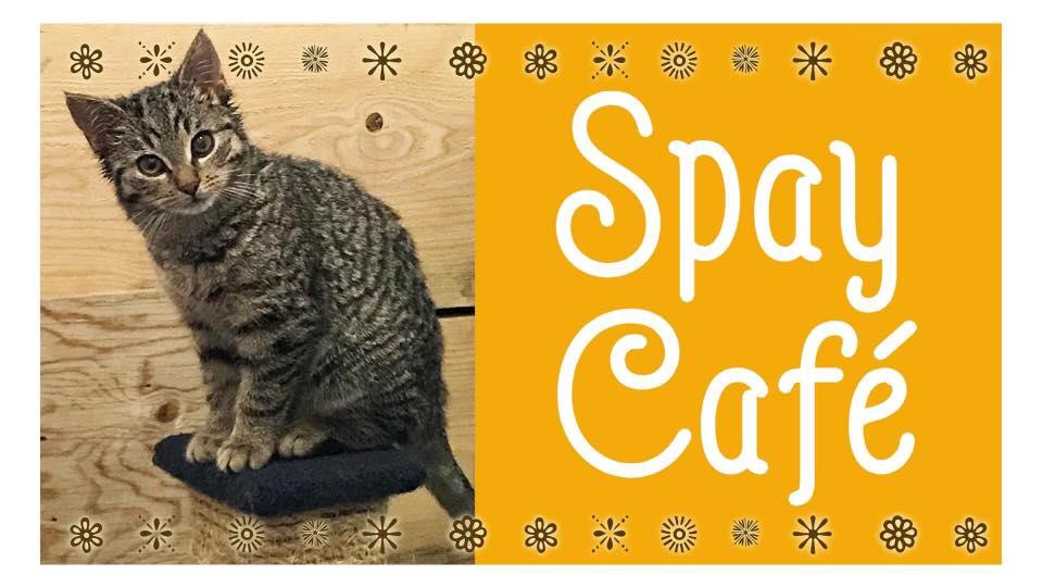 Spay Cafe.jpg