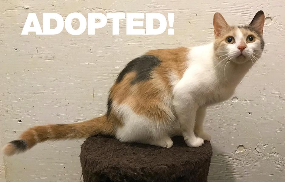 Valerie-Adopted.jpg