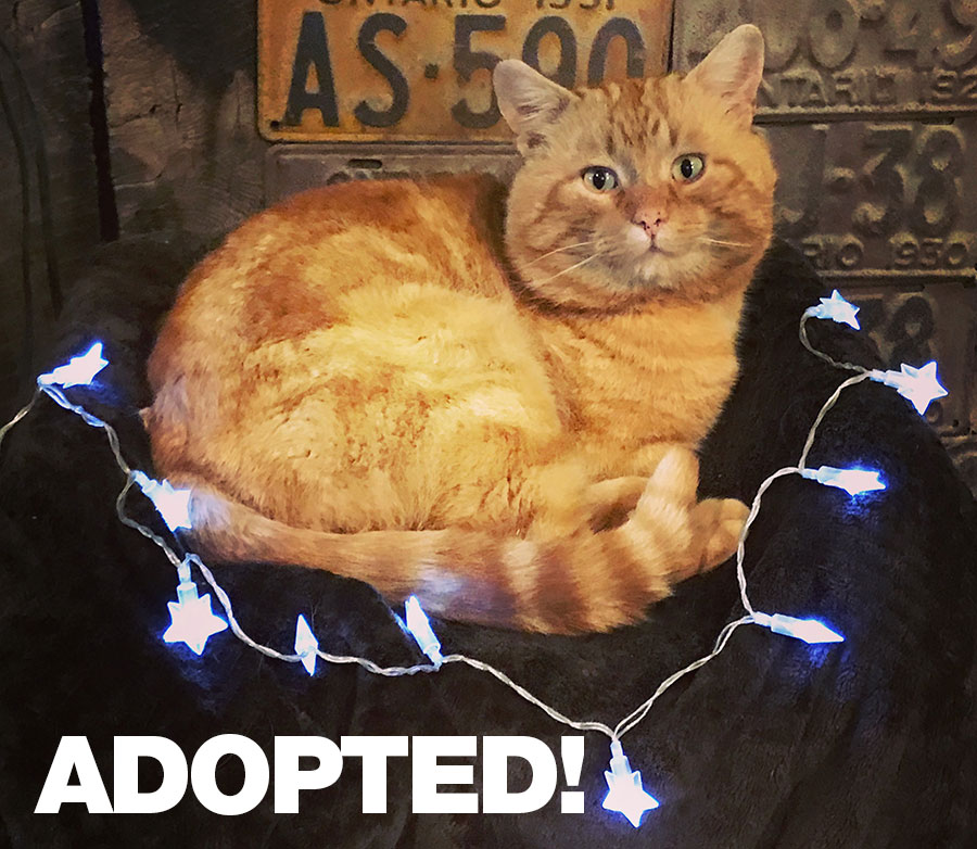 Garfield-Adopted.jpg