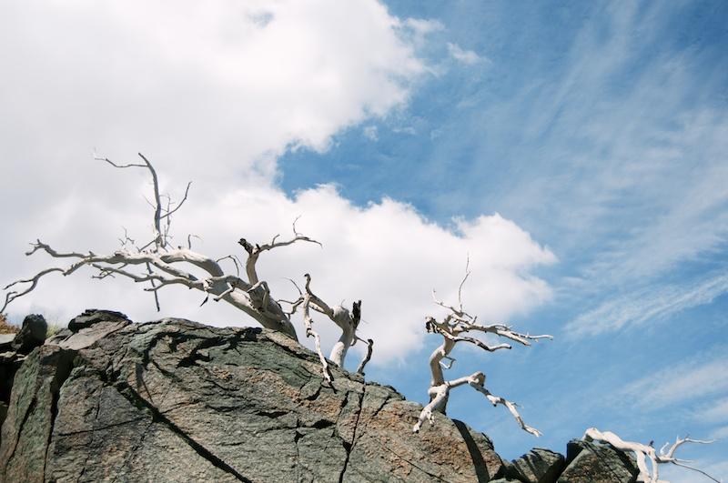 2014 07 26 Mt Baldy Hike 190