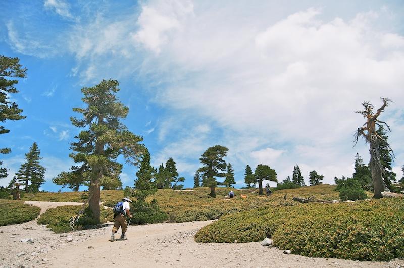 2014 07 26 Mt Baldy Hike 62