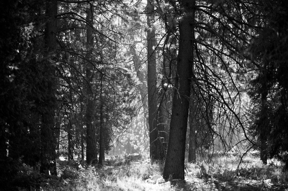 2017 11 10 Yosemite 424.jpg