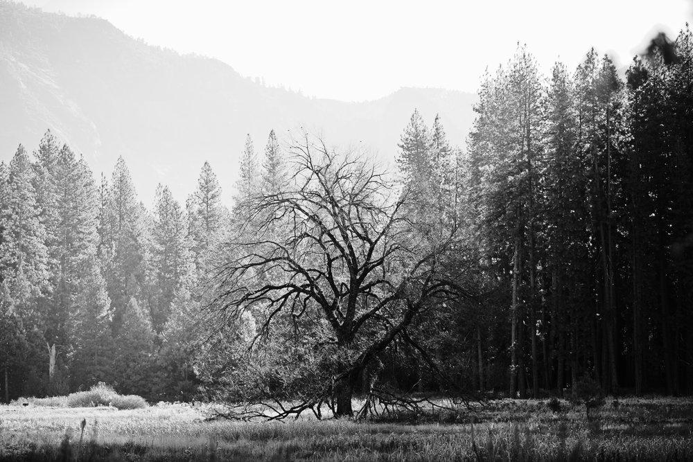 2017 11 10 Yosemite 434.jpg