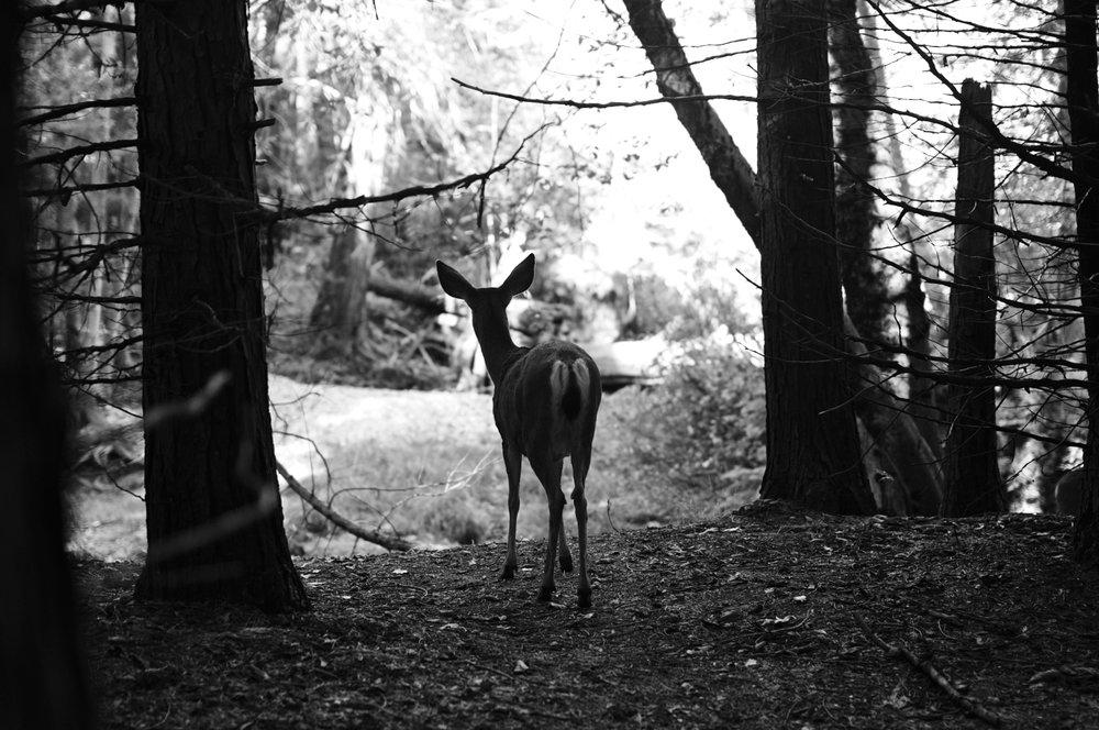 2017 11 10 Yosemite 463.jpg