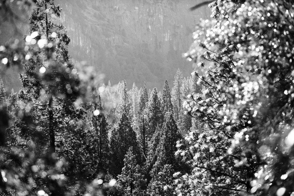 2017 11 10 Yosemite 522.jpg
