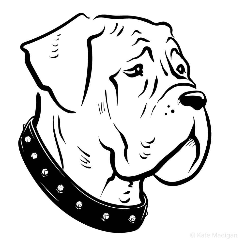 Black and white drawing of a sad, melancholy, depressed, gloomy mastiff dog in a heavy studded collar  . Copyright Kate Madigan.