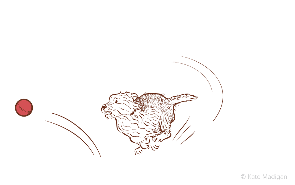 Vector drawing of a bouncy terrier dog chasing a ball. Copyright Kate Madigan.