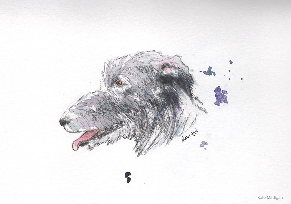 Lurcher. Pencil sketch with watercolour.